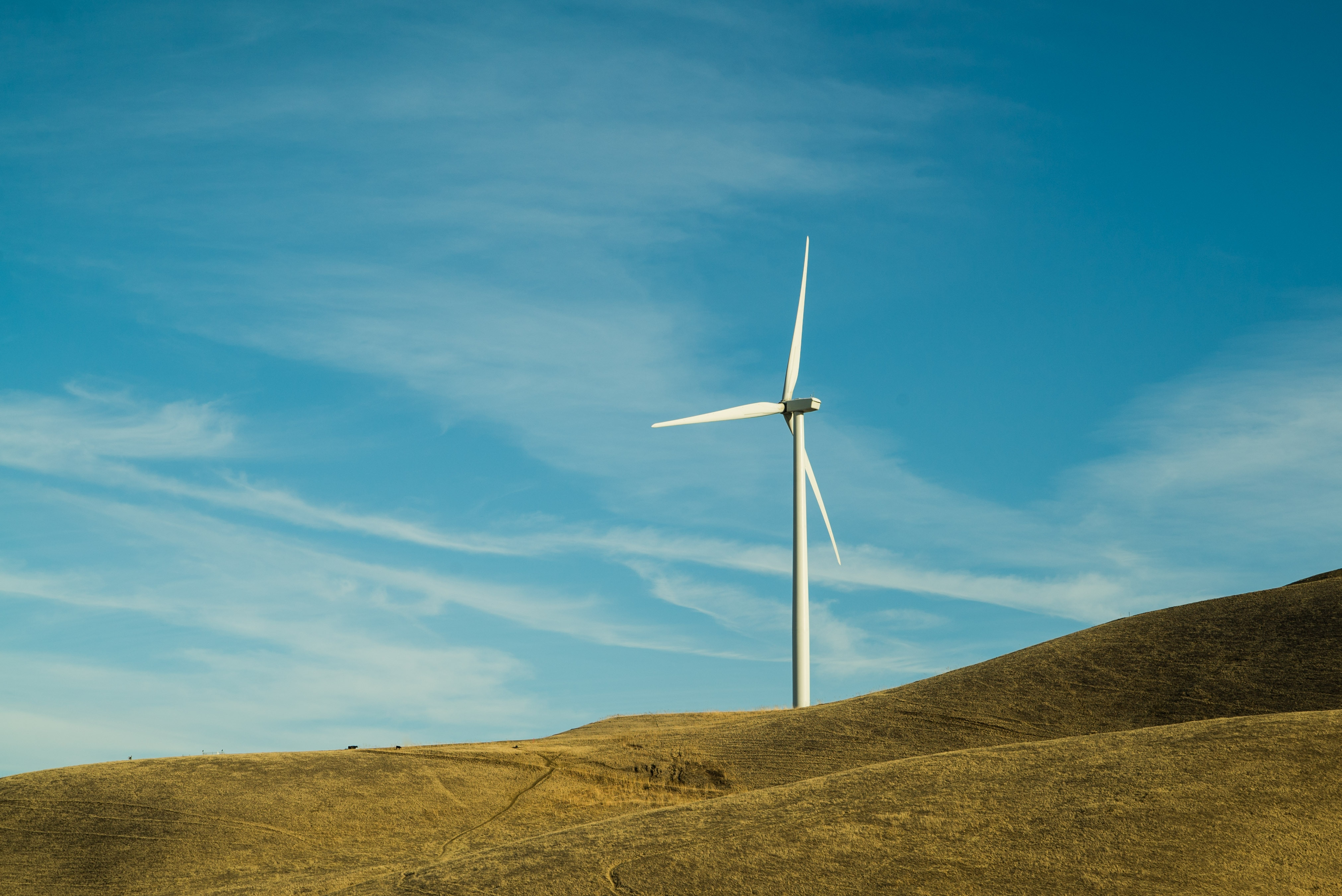 How can wind investors cope with price cannibalisation?